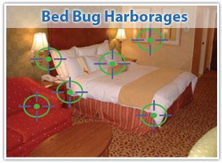 bed bugs treatment cost ukulele